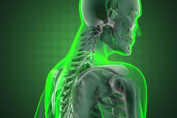 Knochen Bild