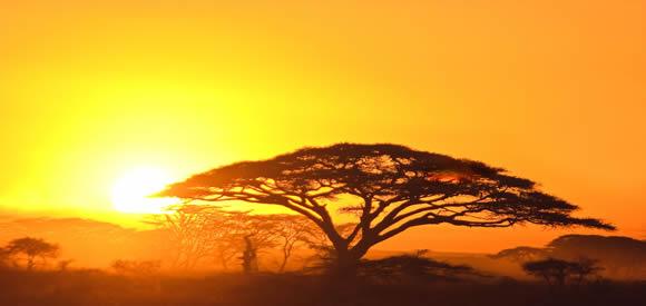 banner_afrika