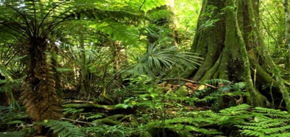 banner_rainforest