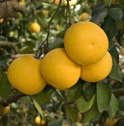 prod_grapefruit